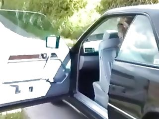 British teen flashes on a car journey